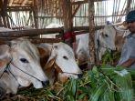 penjual-hewan-kurban-sapi-kelompok-tani-majumakmur_20200710_113712.jpg