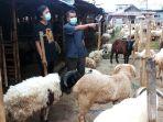 penjualan-hewan-kambing-laris-manis_20210630_193855.jpg