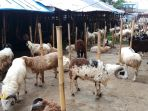 penjualan-hewan-kambing-laris-manis_20210630_193859.jpg
