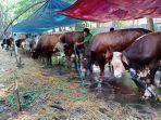 penjualan-hewan-korban-di-jakarta-stabil-dan-cendrung-meningkat_20200719_162418.jpg