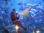 penyelam-berkostum-santa-klaus-feeding-show-seaworld_20161224_053625.jpg