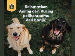 penyelamatan-anjing.jpg