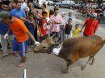 penyembelihan-hewan-kurban-idul-adha-1440-h_20190812_132107.jpg