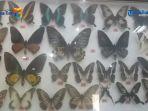 peresmian-sanctuary-kupu-kupu-dan-sky-bridge-di-taman-nasional-bantimurung_20170311_200543.jpg