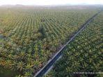 Kemendag: Produk Kelapa Sawit Indonesia Terbukti Diterima Negara EFTA
