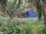 personel-polres-dumai-menggerebek-satu-gubuk-di-kawasan-mundam-kecamatan-medang-kampai-kota-dumai_20180516_133007.jpg