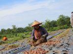 petani-bawang-merah_20170728_165229.jpg