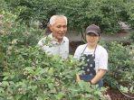 petani-bluebery-di-jepang-kiyoshi-asami-beserta-putrinya.jpg