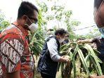Genjot Produktivitas dan Penghasilan Petani Buah Naga Lewat Program 'Cahaya untuk Sang Naga'