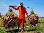 petani-indonesia-23.jpg