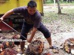 petani-kelapa-sawit-di-riau.jpg
