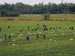 petani-kendal-panen-bawang-merah_20210505_120714.jpg