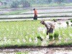 petani-menanam-padi_20160530_162347.jpg