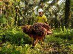 Supaya Terhindar dari Sasaran Kampanye Hitam, Percepat Penyelesaian Tata Batas agar Sawit