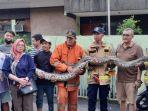 petugas-damkar-berhasil-mengamankan-ular-sanca-berukuran-6-meter.jpg