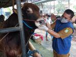 petugas-dinas-ketahanan-pangan-cek-kesehatan-hewan-kurban_20200623_111604.jpg