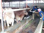 petugas-dinas-ketahanan-pangan-cek-kesehatan-hewan-kurban_20200623_111752.jpg