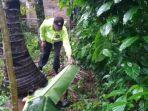 Penyadap Nira Ditemukan Tewas dengan Kepala Luka-luka, Disebut Jatuh dari Pohon Kelapa