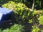 pisang-kepok123.jpg