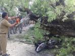 Kalau Motor Tertimpa Pohon, Ternyata Bisa Klaim Ganti Rugi, Ini Caranya