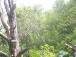 pohon-cengkih-bersejarah-di-maluku-utara_20170714_161404.jpg