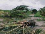 pohon-sawit-di-perkebunan-yang-hancur-akibat-amukan-gajah-sumatera-sel.jpg