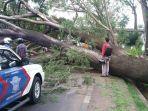 pohon-tumbang-di-flyover-universitas-indonesia_20170204_211132.jpg