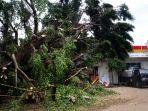 pohon-tumbang-di-stasiun-serpong-tangsel_20191223_210139.jpg