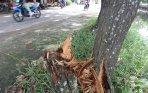 pohon-tumbang-tersangga-pohon-sebelah-dibiarkan_20150118_164404.jpg