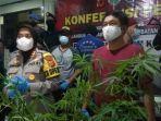 Keputusan Terbaru PBB: Hapus Ganja dari Daftar Narkotika