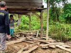 Kawanan Gajah Liar Rusak 3 Gubuk dan Tanaman Perkebunan Warga di Aceh Timur