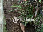 posisi-kaki-manusia-yang-kuburan-di-desa-tegowangi-kecamatan-plemahan_20180518_105908.jpg