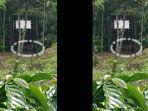 potongan-video-harimau-tertangkap-di-kawasan-muaraenim.jpg