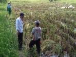 presiden-joko-widodo-tengah-berbincang-dengan-seorang-petani_20160317_120742.jpg