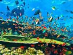 program-diving-fam-trip-labuan-bajo-ntt_20160902_094314.jpg