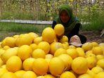 program-petani-muda-panah-merah_20190426_164737.jpg