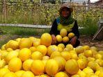 program-petani-muda-panah-merah_20190426_164814.jpg