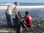 KKP Evakuasi Lumba-lumba Terdampar di Jembrana Bali