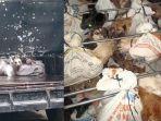 Operasi Ketupat Progo, Polisi Amankan Puluhan Anjing Dibungkus Karung Hendak Dijual di Solo