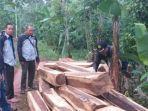 Menelusuri Aktivitas Mafia Kayu di Tanggamus: Sebar Mata-mata Hingga Melibatkan Sopir Truk