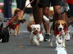 purina-alpo-dog-run-2015_20150524_190630.jpg