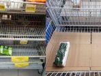 rak-makanan-di-supermarket-solo-kosong.jpg
