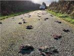 ratusan-burung-secara-misterius-ditemukan-mati.jpg