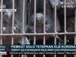 ratusan-kelelawar-di-pasar-hewan-depok.jpg