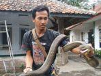 rentul-pawang-ular-saat-diremui-di-rumahnya-desa-windujanten.jpg