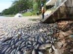 Ribuan Ikan di Keramba Apung di Perairan Awang Bangkal Banjar Mati Mendadak