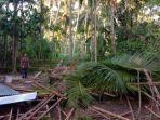 rumah-janda-tertimpa-pohon-kelapa.jpg