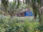 satu-gubuk-di-kawasan-mundam-kecamatan-medang-kampai-kota-dumai_20180516_132506.jpg