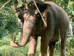 save-elephant-foundation.jpg