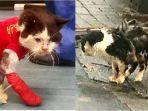 seekor-kucing-liar-ditemukan-idap-hiv-akhirnya-mati.jpg
